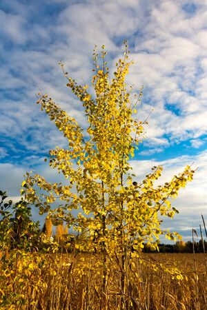 Closeup of a tree with yellow leaves in autumn