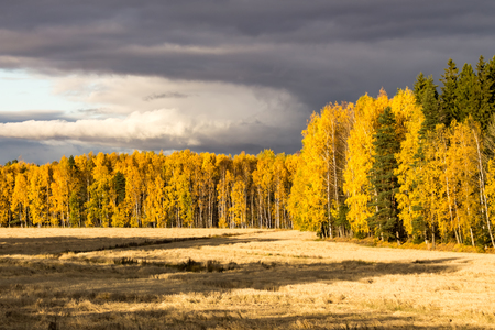 A forest in autumn colors viewed across a field with cloudy sky
