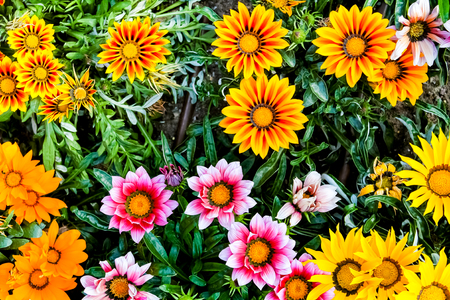 Colorful flowers shown from above