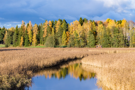 Yellow and green trees in autumn with river leading across reeds in foreground