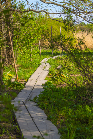 A wooden pathway leading through grass and trees