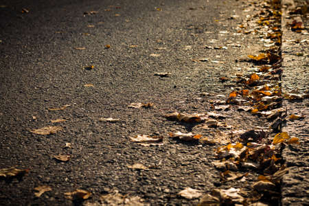 Closeup of autumn leaves on side of a street Imagens
