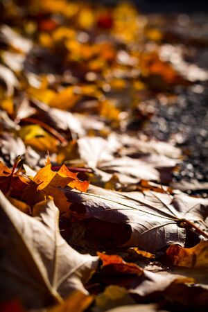 Closeup of autumn leaves on ground