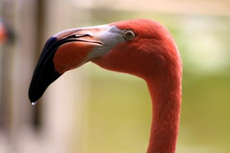 Flamingo Reklamní fotografie