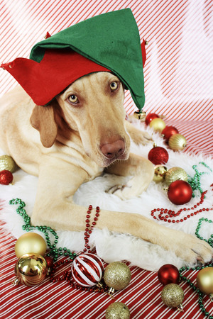 santa s helper: Santas Elf Stock Photo