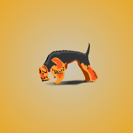 illustration of  Dog Airedale Terrier  Vector Illustration Stock Photo