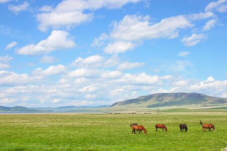 horses walk in a field on bright green grass