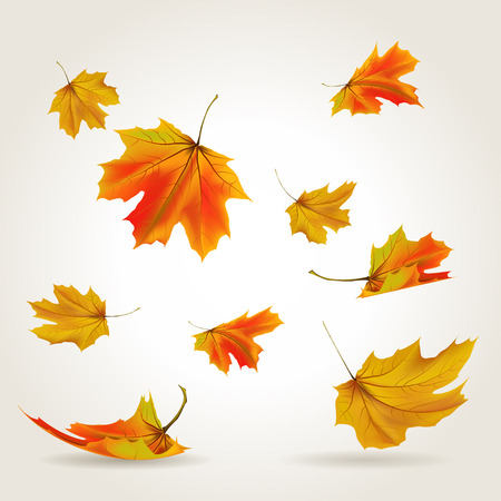 Падение листьев установить иллюстрацию