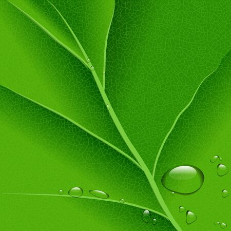 macro leaf: ector water drops on green leaf macro background