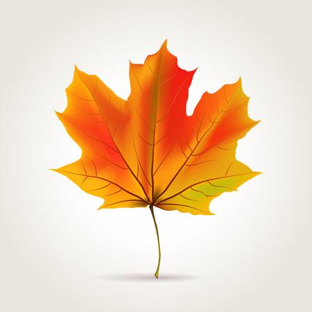 Colorful autumn realistic orange leaf, vector illustration