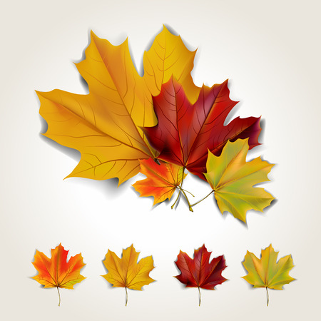Set of colorful autumn leaves with shadow. Vector illustration Stock Illustratie