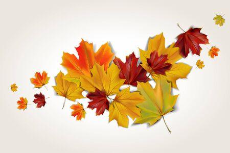 Kleurrijke herfst esdoorn bladeren, abstracte illustratie Stockfoto - 63247671