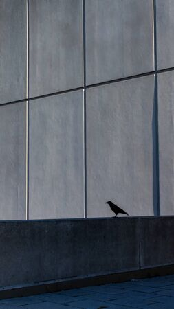 The silhouette of a crow is viewed from a middle distance, where it is perched on a rooftop ledge. Behind it, panels of a concrete gray wall are seen in contrast to the darker, shaded wall below it. Stock fotó