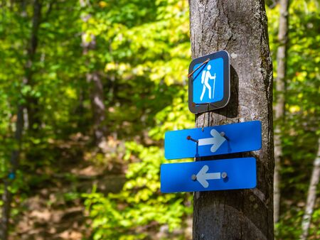 A hiking trail marker indicates a fork in the footpath. Arrows on blue signs point both left and right in the forest, where they are nailed to a tree.