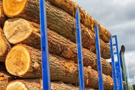 A logging truck with blue bars carries several freshly-cut tree logs. The wood is ready for transport to be cut into lumber.