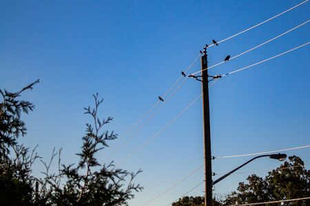 Birds are perched on power lines held up by a wooden pole. Stock fotó