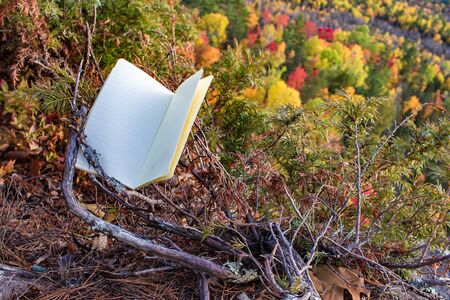 A blank notebook sits in a low coniferous shrub on the edge of a cliff. The open, lined pages offer space for anything above an autumn forest below. Stock fotó