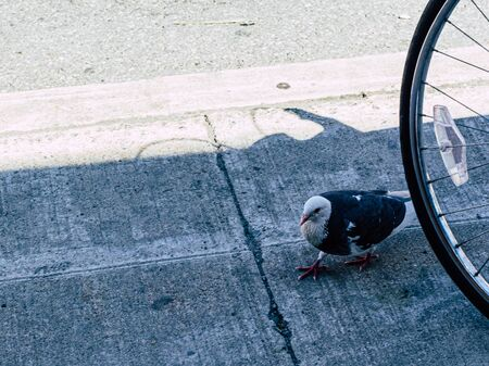 A white and dark blue pigeon walks by a bicycle tire on a concrete city sidewalk at the edge of a road.