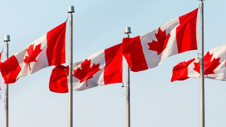 Four Canadian flags, among several flying in one location, are blowing in the wind on flagpoles against a pale blue sky.