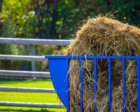 A blue metallic bale feeder contains a bale of hay for the animals in a fenced enclosure on a farm.