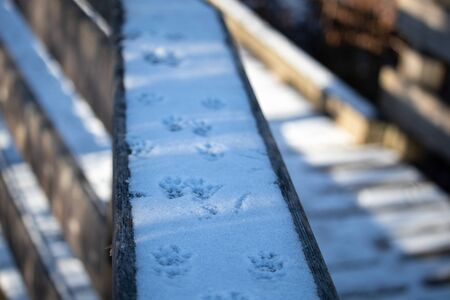 The top of a wooden railing is coated in a layer of snow from a recent snowfall, which now features the footprints of a squirrel. The tracks move down the wood through shadows and light.