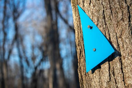 A plastic blue triangle serves as an arrow trail marker as it is nailed loosely to a tree trunk. Viewed up close, its clear edges and the textured bark area seen against a blurred forest behind it. Stock fotó