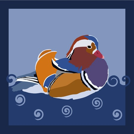 water fowl: Colorful wood duck - vector illustration