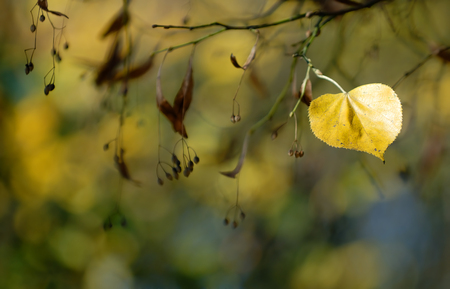 Natural background, colorful autumn leaf in the park Фото со стока