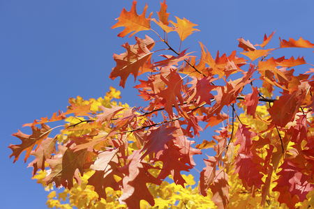 Colorful autumn leaves in the park, blue sky in background Фото со стока