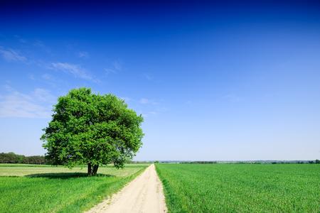 Einsamer Baum neben einer Landstraße, die zwischen grünen Feldern verläuft, blauer Himmel im Hintergrund