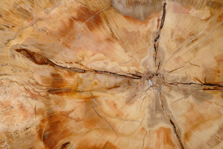 Natural background, cross section through fossilized wood