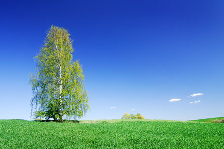 Idyllic landscape, lonely tree among green fields, blue sky in the background