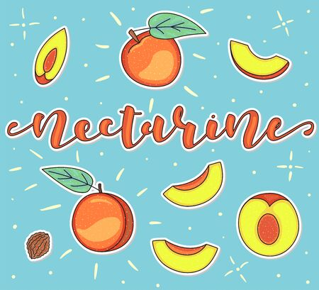 Nectarine. Whole and pieces. Vector stock illustration. Colored fruit set using doodle art on blue background. Lettering.