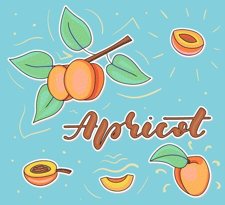 Apricot. Whole and pieces. Vector stock illustration. Colored fruit set isolated on blue background. Lettering.