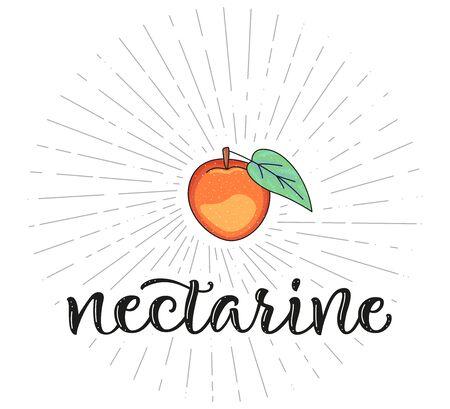 Nectarine. Fruit symbol for farm market menu. Healthy food design. Vector stock illustration. Lettering