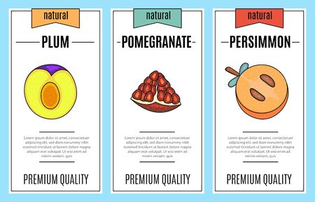Fresh fruit banner set. Slice of pomegranate, plum, persimmon. Vector stock illustration. Food and drink design.