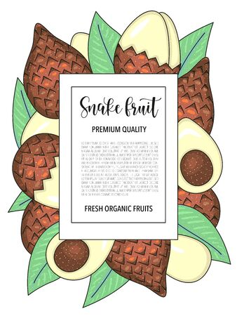 Vector background with snake fruit, whole and pieces. Vector stock illustration isolated on white background. Card design with fruits. Botanical garden template. Product information and lettering. Illustration