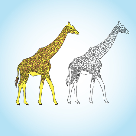 Giraffe, (genus Giraffa), any of four species in the genus Giraffa of long-necked cud-chewing hoofed mammals of Africa, with long legs and a coat pattern of irregular brown patches on a light background. Giraffes are the tallest of all land animals.
