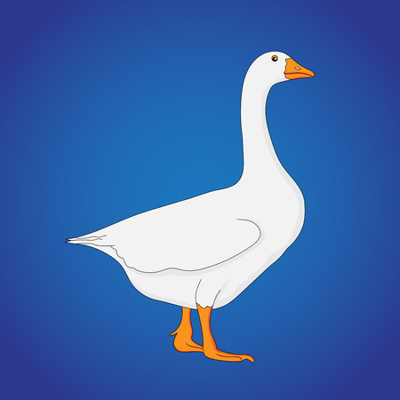 Duck is the common name for a large number of species in the waterfowl family Anatidae which also includes swans and geese. Ducks are divided among several subfamilies in the family Anatidae; they do not represent a monophyletic group but a form taxon, since swans and geese are not considered ducks.