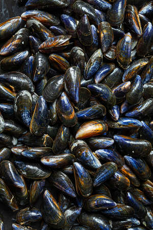 Fresh raw organic mussels at the seafood market in Normandy in France as natural background