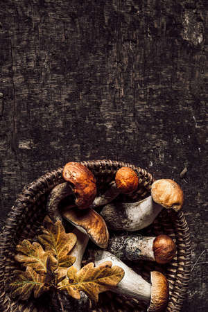 Autumn composition with porcini mushrooms and oak leaves on dark old wooden background. Flat lay, copy space