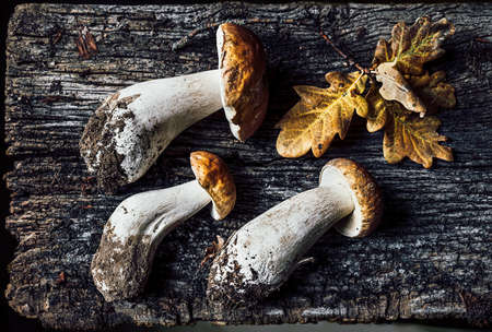 Autumn composition with porcini mushrooms and oak leaves on dark old wooden background. Flat lay