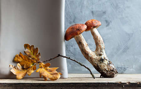 Autumn composition with boletus mushroom and oak leaves on the gray background