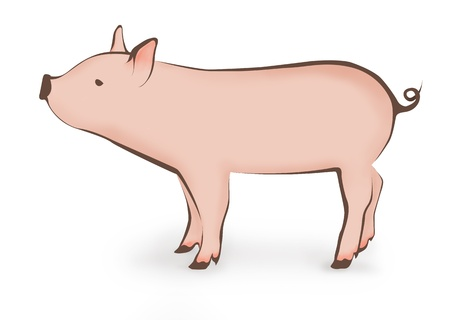 Pink pig illustration  illustration
