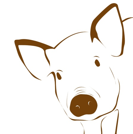 young pig: Illustration of young pig - close up  Stock Photo