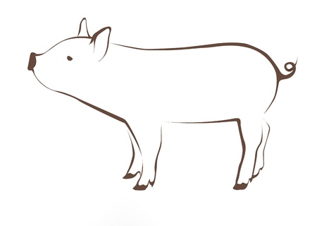 young pig: Very young pig illustration
