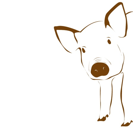 Cute young pig illustration