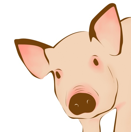 young pig: Close up of pig - illustration