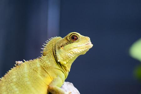 zoomed: lizard in focal zoomed in