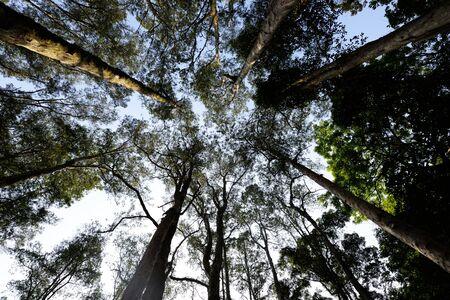 Huge Giant tree trunk in national park Reklamní fotografie
